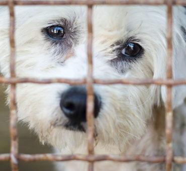 Les pénalités pour un mauvais traitement des animaux